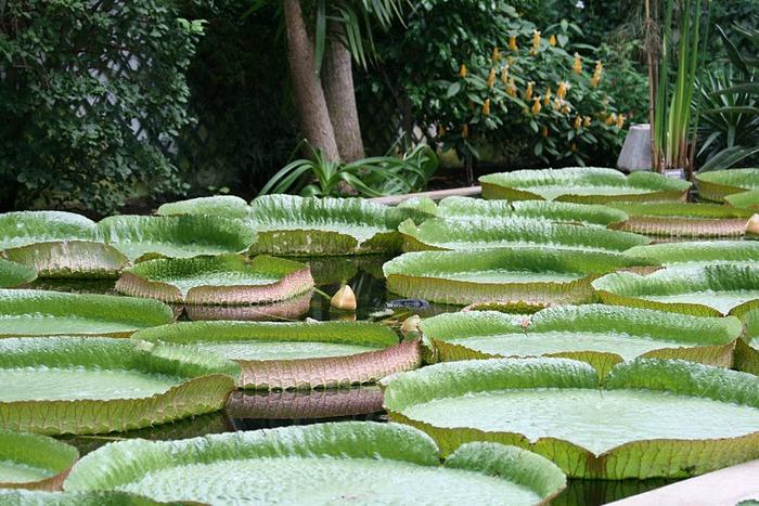 Сады Виллы Таранто 64613