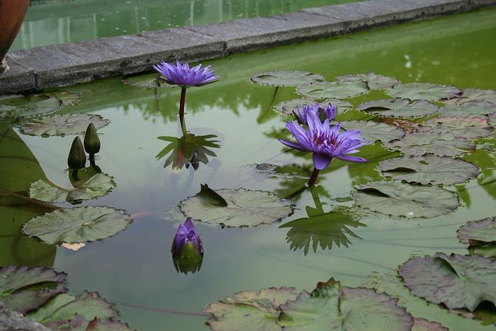 Сады Виллы Таранто 60276