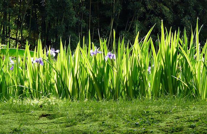 Сады Виллы Таранто 67415
