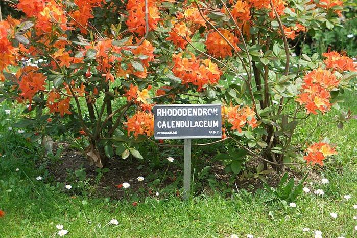 Сады Виллы Таранто 70838