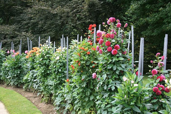 Сады Виллы Таранто 80979