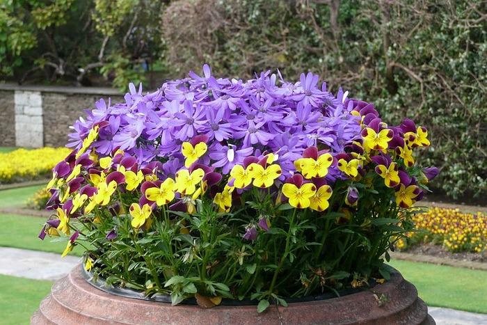 Сады Виллы Таранто 24878
