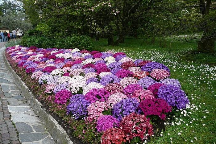 Сады Виллы Таранто 41577