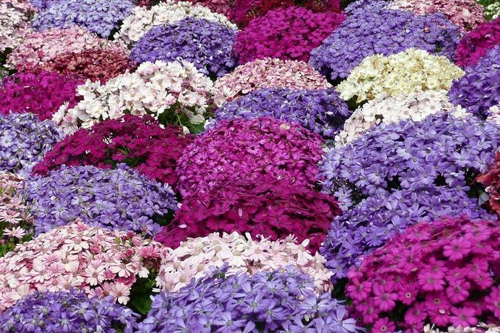 Сады Виллы Таранто 49946