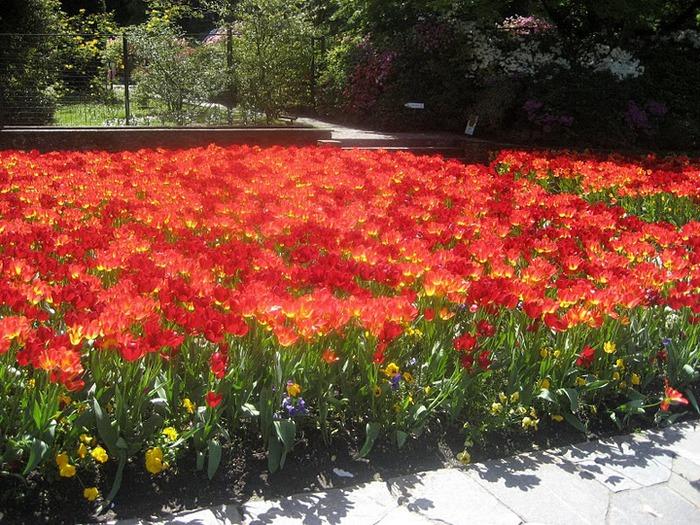 Сады Виллы Таранто 81046
