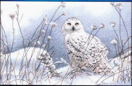 35221 Northwind Owl (462x300, 82Kb)