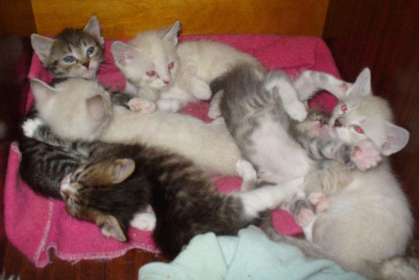 kittens (600x402, 77Kb)