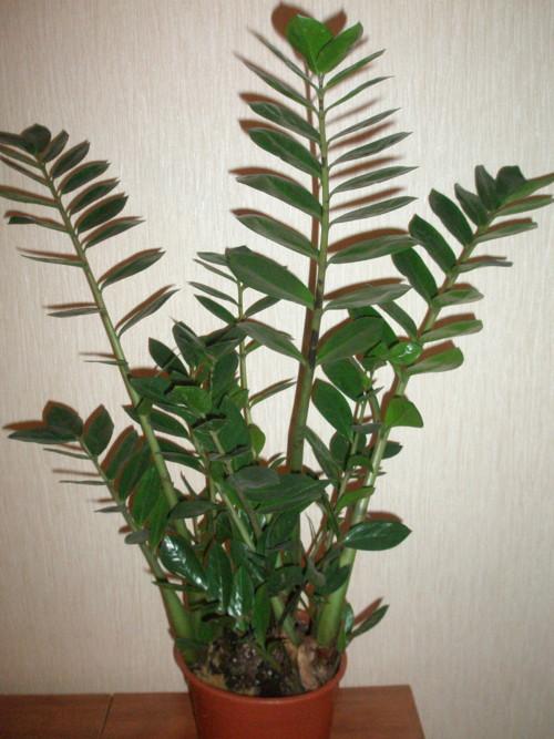 домашние растения с фото с названиями