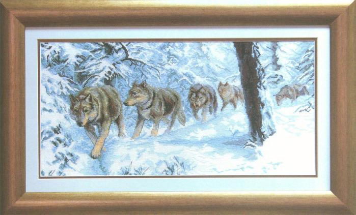 wolf-11 (700x423, 125Kb)