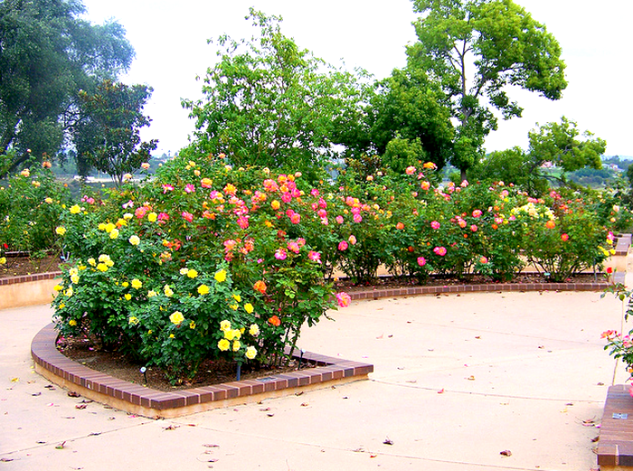 Balboa Park Rose Garden  Flickr - Photo Sharing! (700x521, 784Kb)