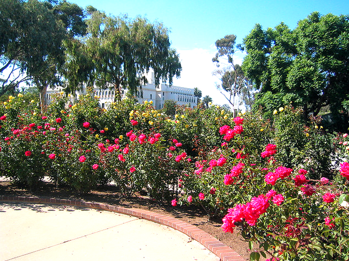 Rose garden at Balboa park  Flickr - Photo Sharing! (700x524, 922Kb)