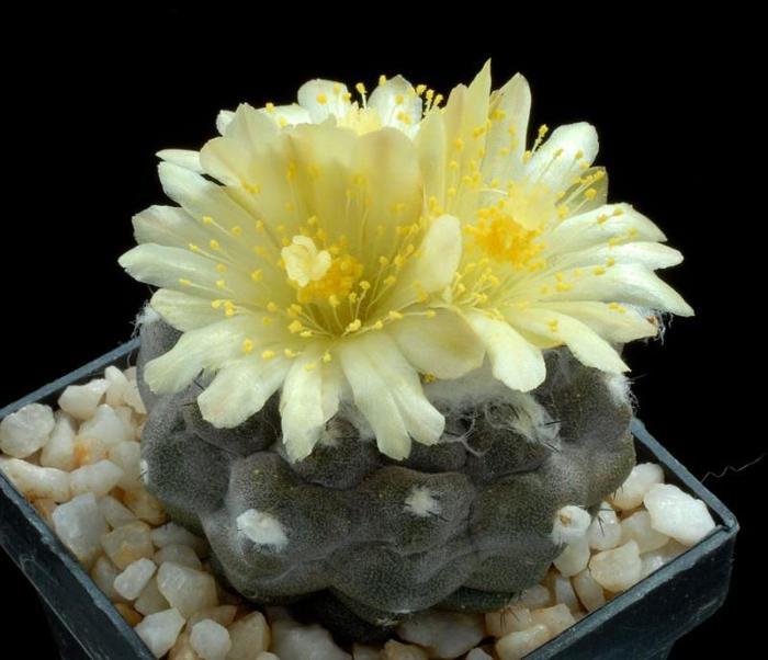 фото кактус прикол
