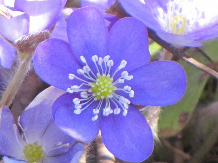 Пахучие цветы в лесу
