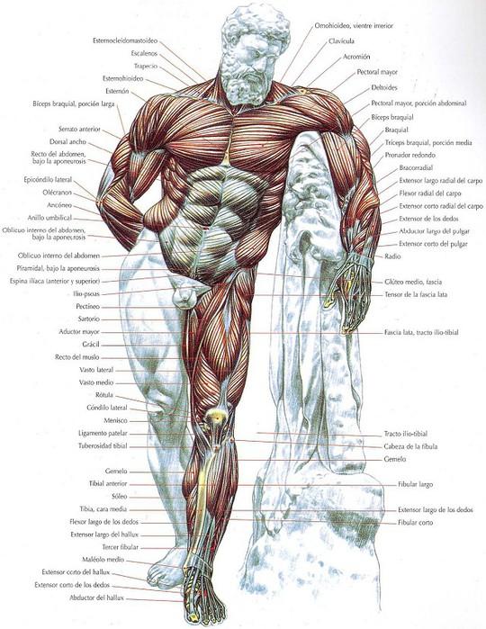 Атлас человека в картинках 1