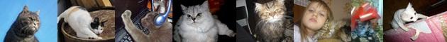 2447247_CATS (630x60, 21Kb)
