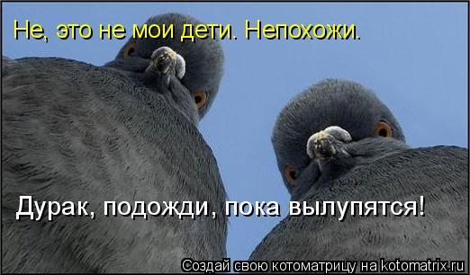 http://img0.liveinternet.ru/images/attach/c/2/73/725/73725964_854441.jpg