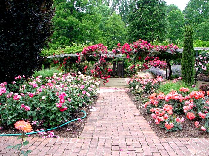 rosegarden.jpg (изображение «JPEG», 1000x750 пикселов) - Масштабированное (74%) (700x524, 944Kb)