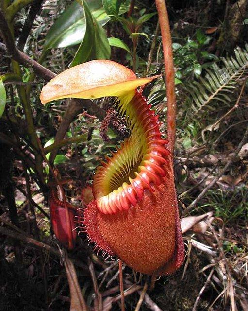 Десять самых удивительных растений
