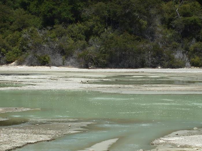 """Священные Воды, или """"Wai-O-Tapu"""" в Новой Зеландии. 63753"""