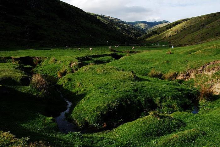 На Новой Зеландии 14053