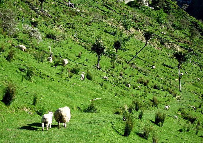 На Новой Зеландии 79139