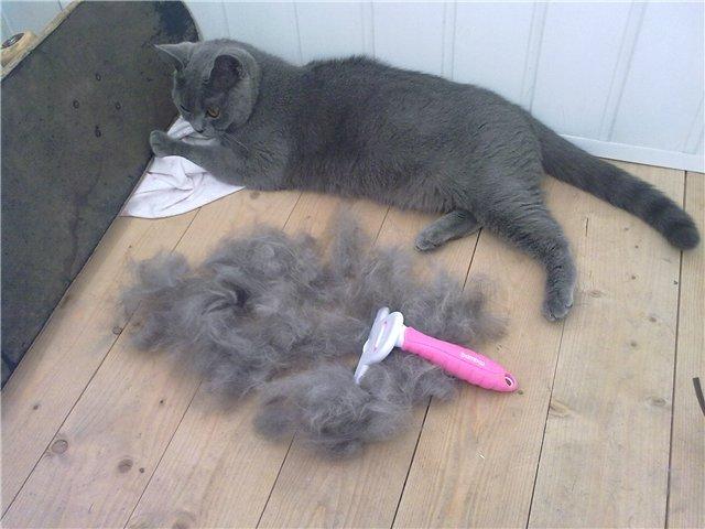 Что делать если кот постоянно и