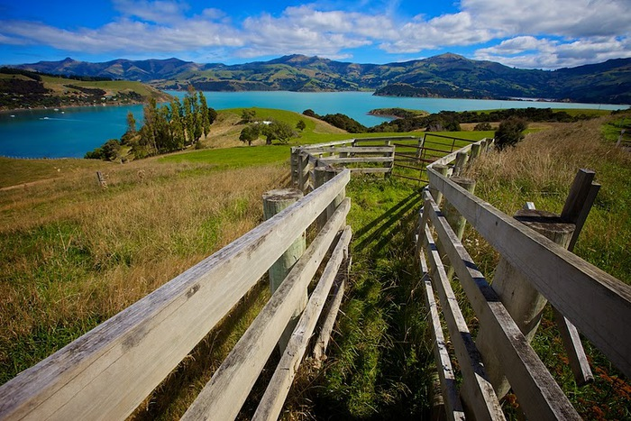 На Новой Зеландии 14667