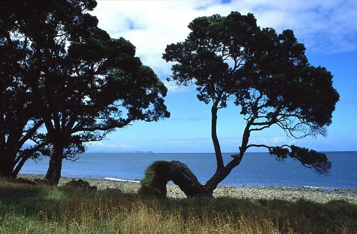 На Новой Зеландии 46798