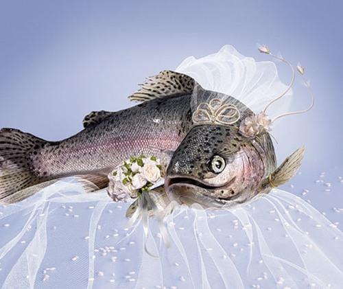 рыба1 (500x421, 53Kb)