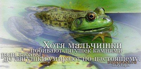 1244846950_cit6 (450x220, 32Kb)