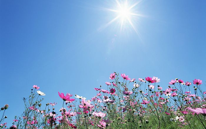 1440x900_Blue_Sky_Flowers_HM030_350A (700x438, 57Kb)