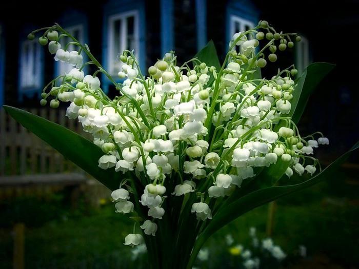 http://img0.liveinternet.ru/images/attach/c/2/73/817/73817980_3498930.jpg