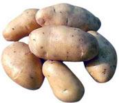 Продам картофель (Россия Голландия) на сервере рекламных объявлений.