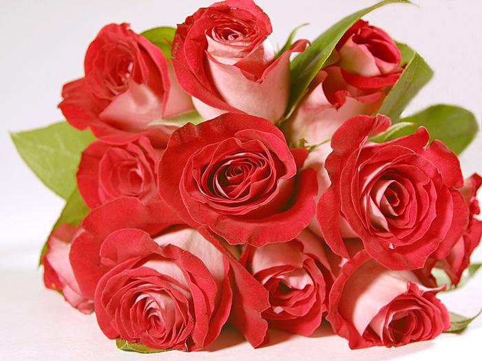 roses_234 (700x525, 159Kb)