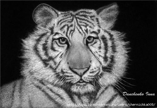 1303055641_belyj-tigr (500x345, 117Kb)
