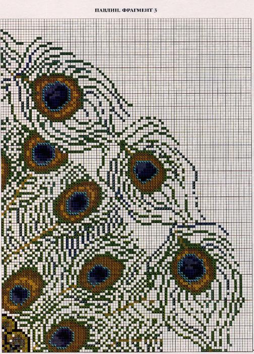 павлин 4(2) (504x700, 279Kb)