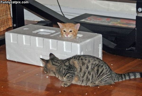Fort_Kitten (600x405, 38Kb)