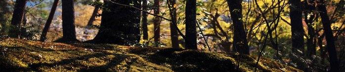 фото природы (700x147, 42Kb)