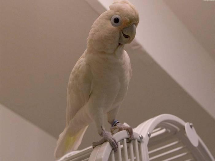 Животные.  Узор. рисовать на картинке.  Шрифт.  E-mail / Телефон.  Картинка. фото Птицы. На главную.  Все разделы фотографий.  Птицы. Обои Белый попугай, фото, картинки.