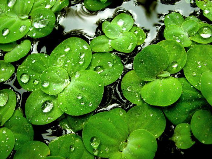 Картинки с зеленым цветом 7