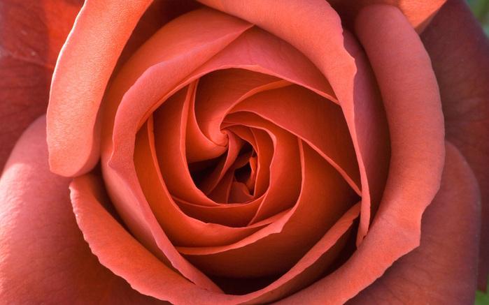 Терракотовые цветы