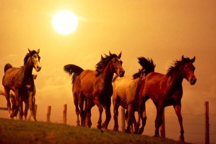 lovak_horse056 (700x466, 91Kb)