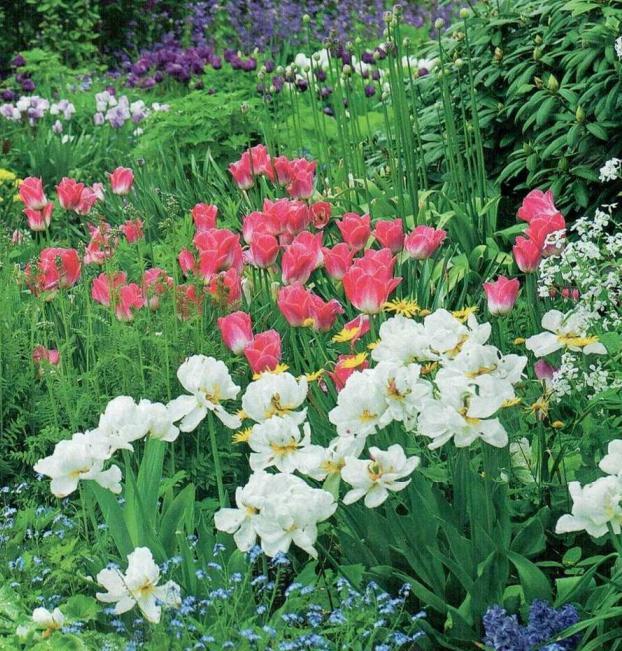 цветы (622x651, 110Kb)