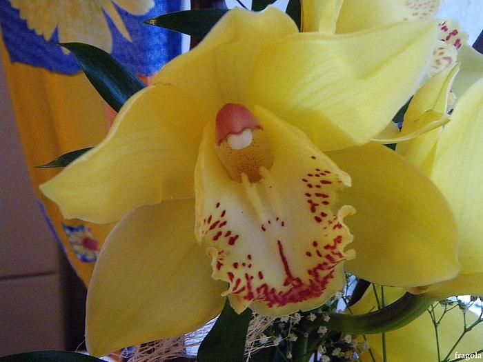 орхидея2 (700x525, 156Kb)