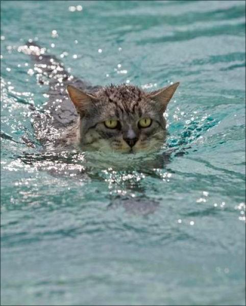 Swin_cats_21 (482x600, 59Kb)