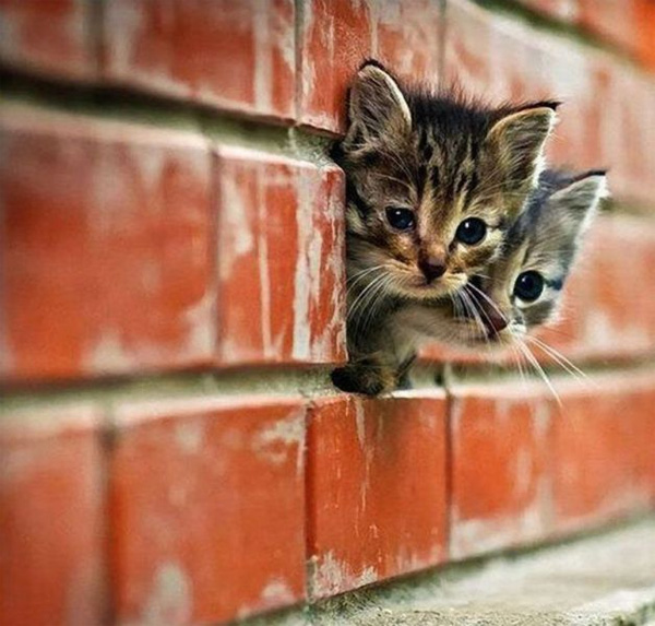 kitten_escape (600x573, 108Kb)