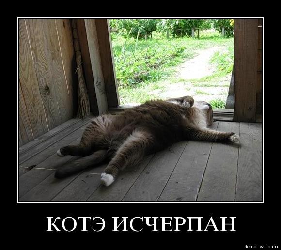 http://img0.liveinternet.ru/images/attach/c/2/74/270/74270878_kotye_ischerpan.jpg