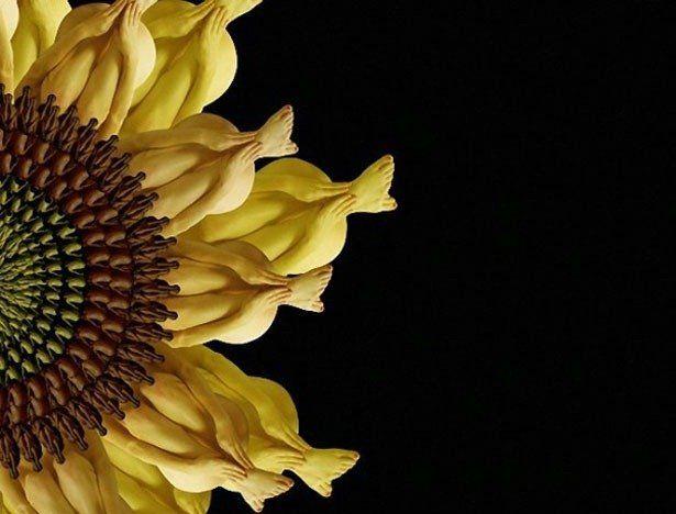 flowers_ (615x468, 39Kb)
