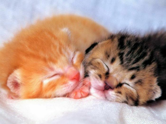 cats0471 (700x525, 353Kb)