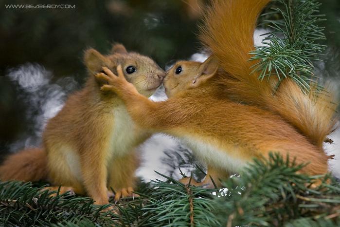 Улыбнуло! )) | Love is...